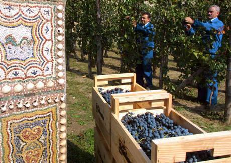 Сбор винограда на раскопках Помпеи