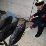 600кг красного тунца конфисковано в Неаполе