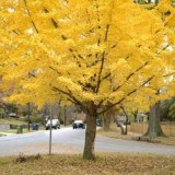 Кольца на деревьях «расскажут» о загрязнении