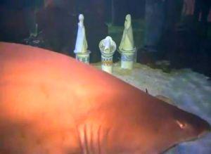 Рождественский вертеп среди акул