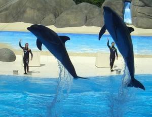 Гардаленд прощается с выступлениями дельфинов