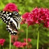 Биопарк в Риме представляет коллекцию бабочек