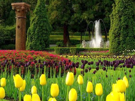 Тюльпаны на вилле Таранто