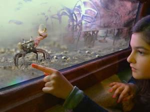 Гигантский японский краб и краб-скрипач в аквариуме Гардаленда