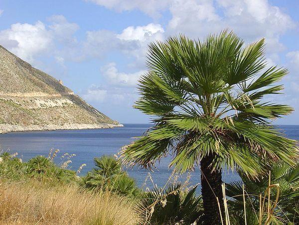 Тропический климат Сицилии