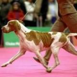 Общественный туалет для собак в Виченце