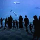 Аквариум в Генуе: новый павильон китообразных