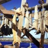«Заплыв» вяленой трески в Варацце