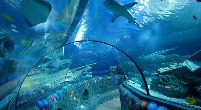Аквариум Sea Life - коридор с акулами