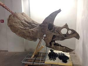 Новый научный музей открывается в Тренто