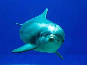 В Генуе появился новый стеклянный дом для дельфинов - дельфин Нау